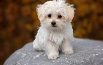 6 Tips Memilih Makanan Anjing yang Baik